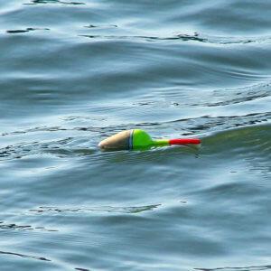 Pose schwimmend