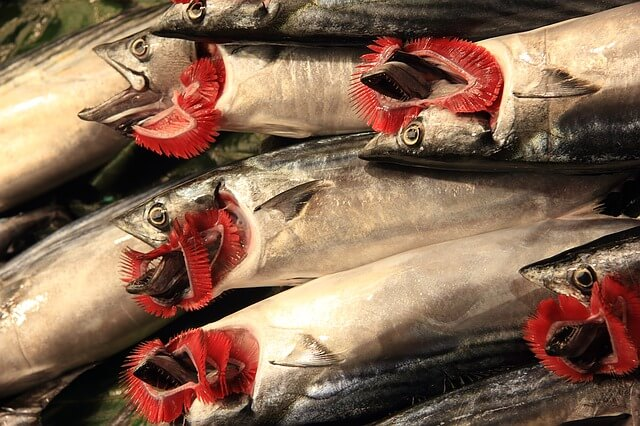 Rote Kiemen Fisch